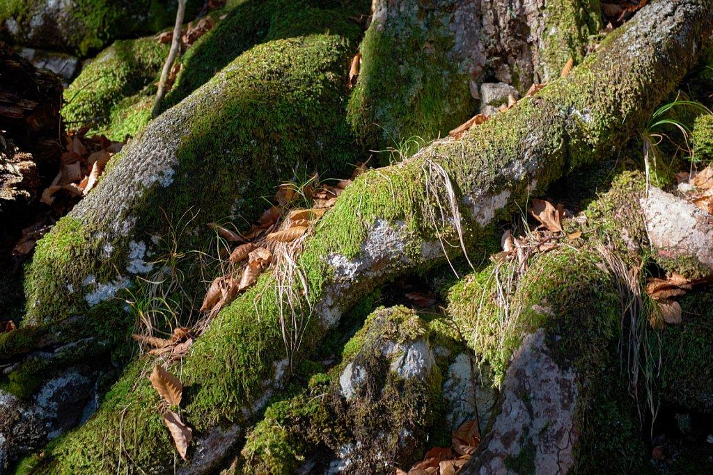 SchellAlm-31102017-104-Brey-Photography.jpg