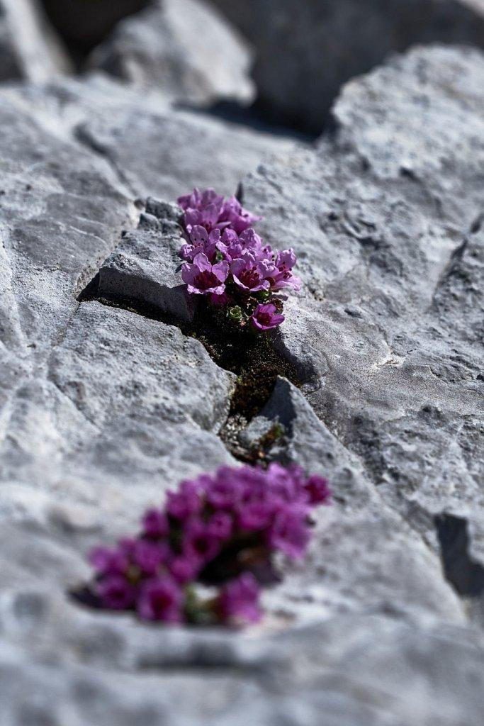 Grubenkarspitze-10052018-103-Brey-Photography.jpg