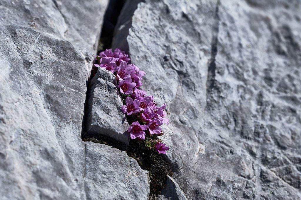 Grubenkarspitze-10052018-102-Brey-Photography.jpg