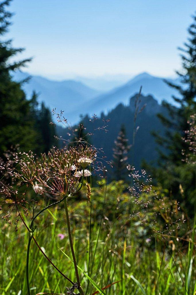Laber-Bergbahn-31072018-004-Brey-Photography.jpg
