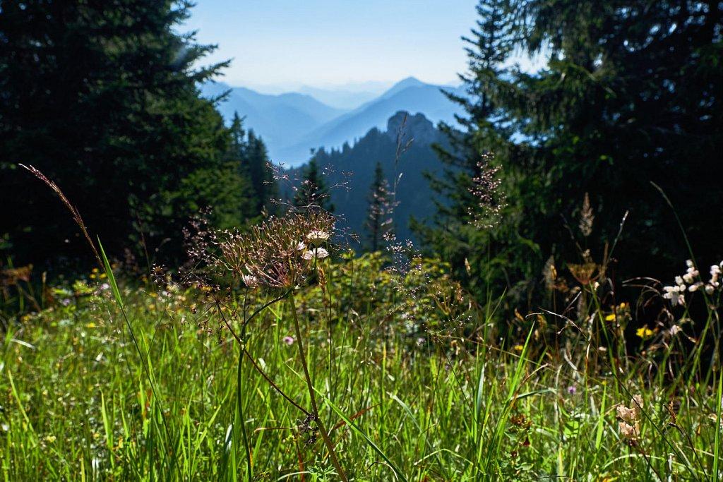 Laber-Bergbahn-31072018-006-Brey-Photography.jpg