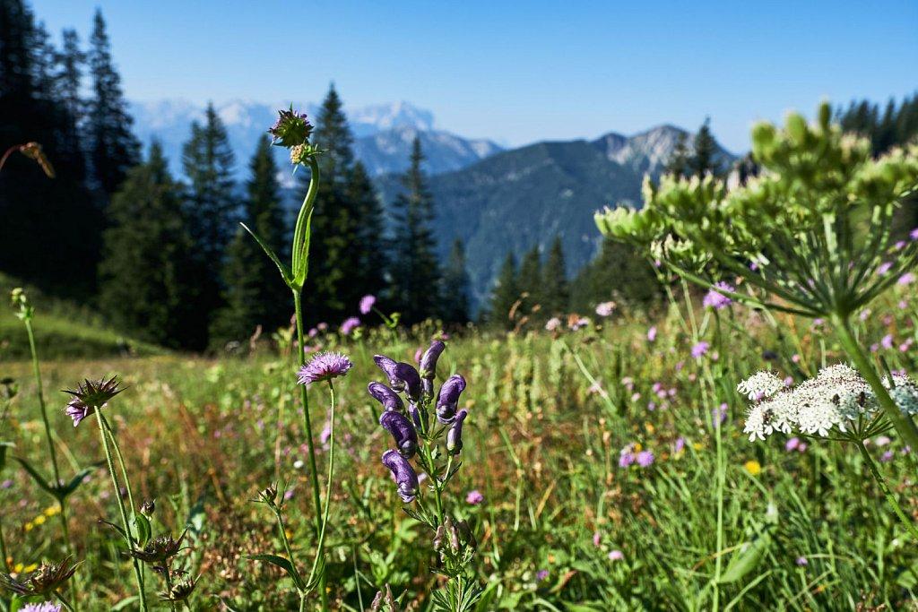 Laber-Bergbahn-31072018-017-Brey-Photography.jpg
