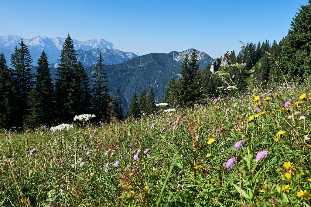 Laber-Bergbahn-31072018-018-Brey-Photography.jpg