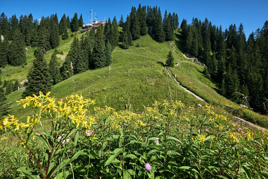 Laber-Bergbahn-31072018-057-Brey-Photography.jpg