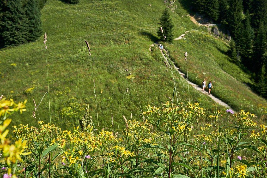 Laber-Bergbahn-31072018-061-Brey-Photography.jpg