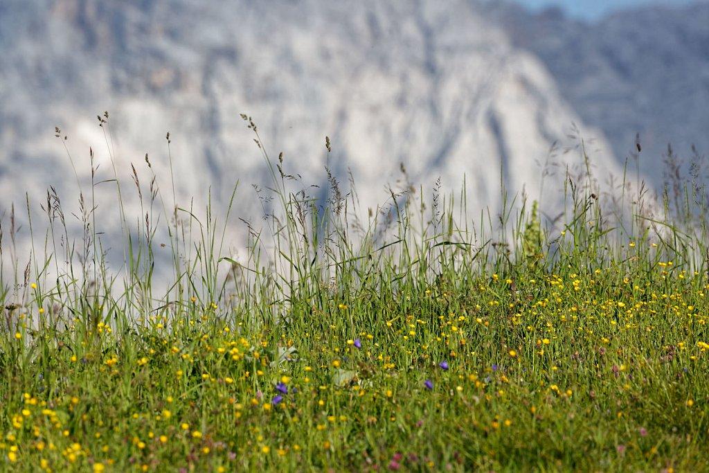 Wettersteinalps-13072018-005-Brey-Photography.jpg