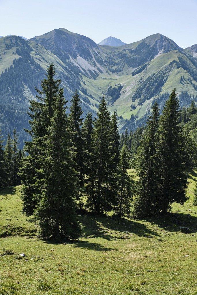Almbetieb-Karwendel-antBRY-08272019-055.jpg