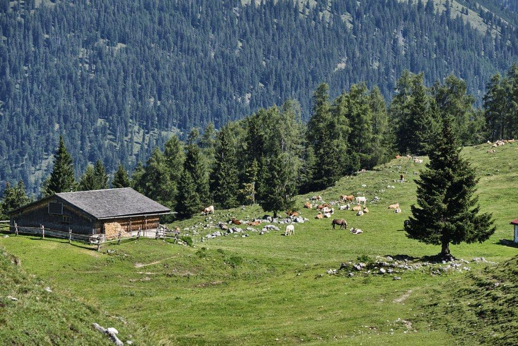 Almbetieb-Karwendel-antBRY-08272019-050.jpg