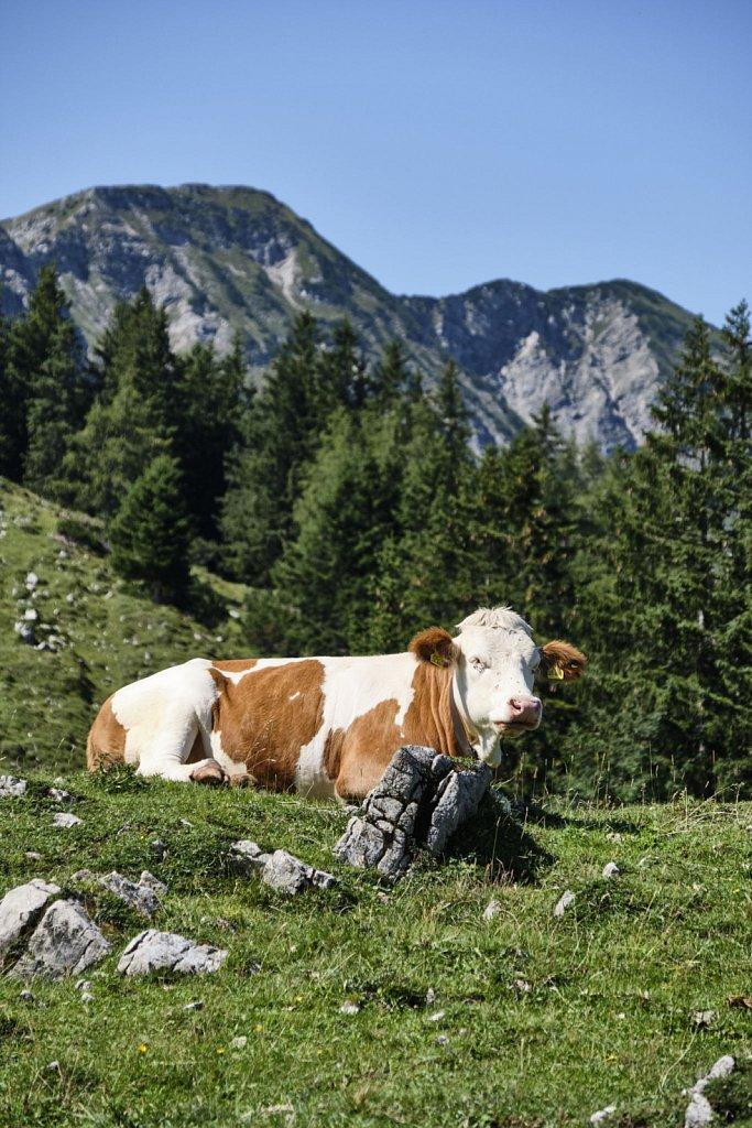 Almbetieb-Karwendel-antBRY-08272019-021.jpg