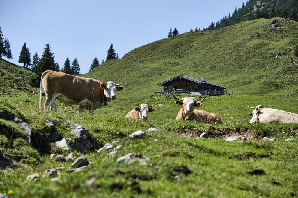 Almbetieb-Karwendel-antBRY-08272019-015.jpg