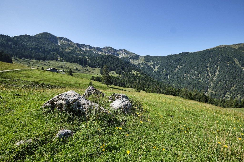 Almbetieb-Karwendel-antBRY-08272019-005.jpg