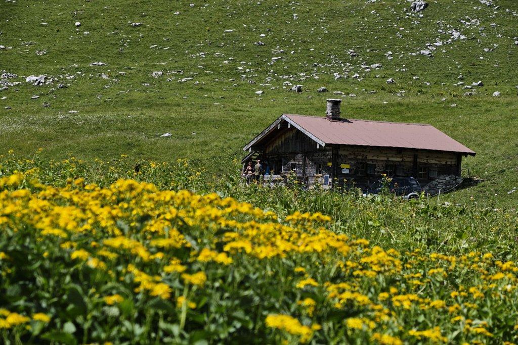 ochsentalalm-Hochleger-antBRY-08042019-050.jpg