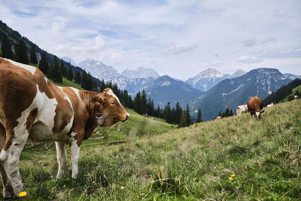 BaumgartenSattel-Karwendel-antBRY-07272019-001.jpg
