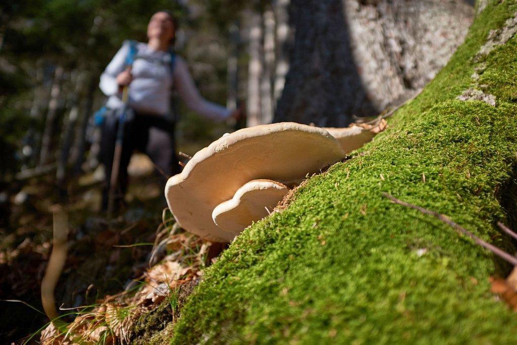 SchellAlm-31102017-092-Brey-Photography.jpg
