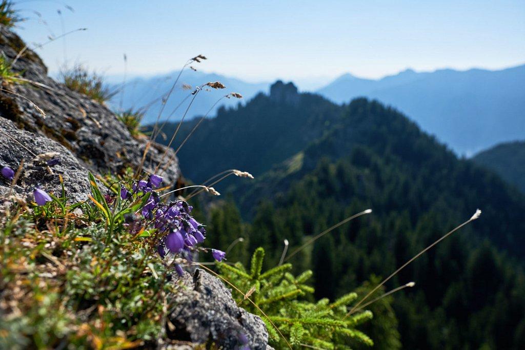 Laber-Bergbahn-31072018-039-Brey-Photography.jpg