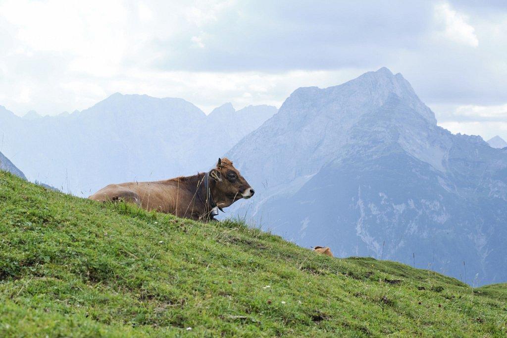 Almbetieb-Karwendel-antBRY-08302019-458.jpg