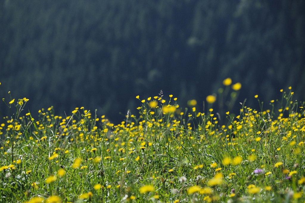 Almbetieb-Karwendel-antBRY-08302019-442.jpg