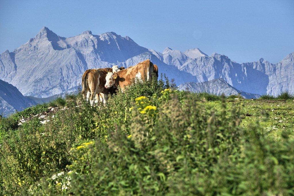 Almbetieb-Karwendel-antBRY-08302019-395.jpg